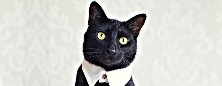 Novo CEO assume Eu Compraria