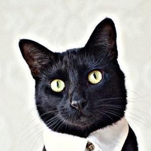 Pacato, o Gato